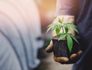 Guide to Growing Cannabis Indoors
